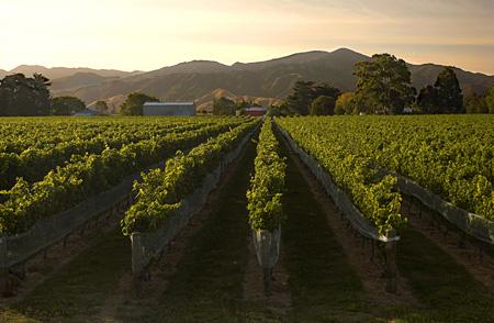 Vin et vignoble de Nouvelle-Zélande